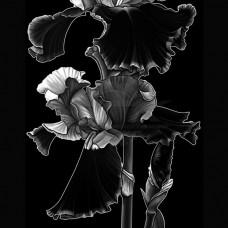 Цветок №48