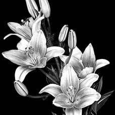 Цветок №51