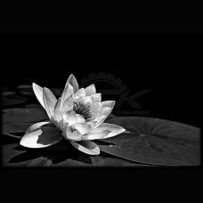 Цветок №56