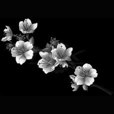 Цветок №91
