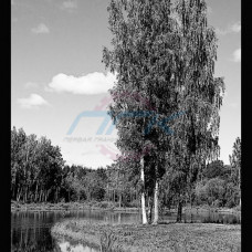 Пейзаж №26